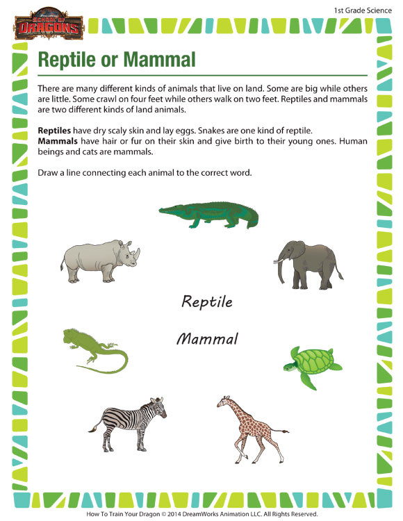 Mammal Worksheets First Grade Reptile or Mammal View – 1st Grade Science Worksheet – sod