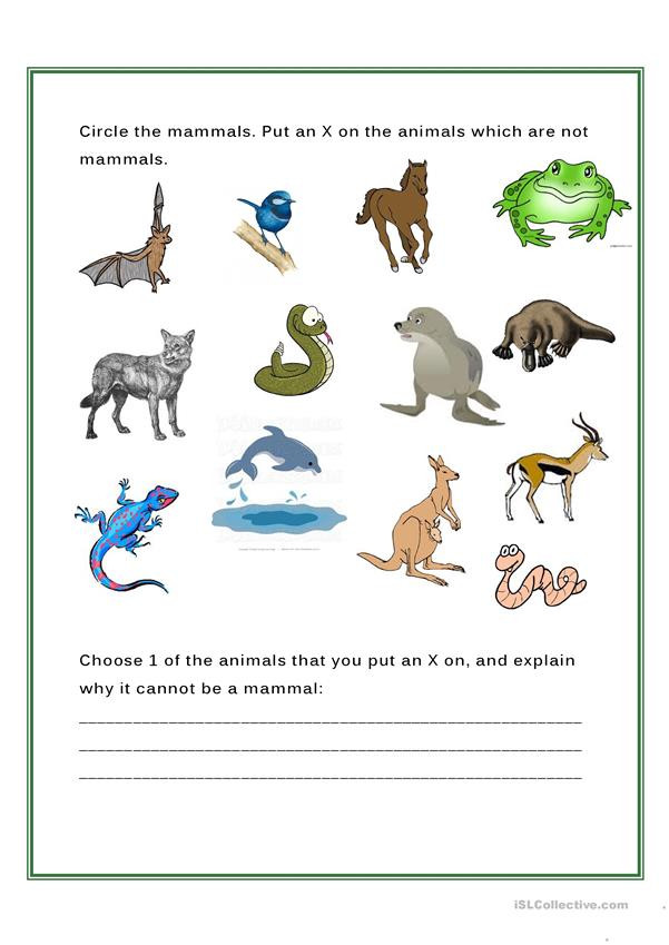 Mammal Worksheets for Kindergarten Mammals English Esl Worksheets for Distance Learning and