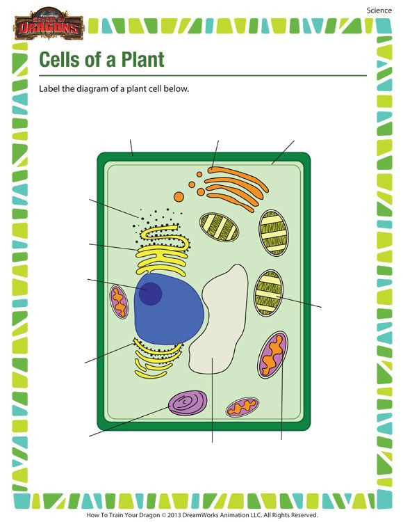 Printable Cell Worksheets Cells Of A Plant – 5th Grade Science Worksheet