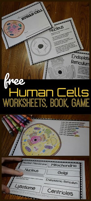 Printable Cell Worksheets Human Cells for Kids Reader Worksheets Games