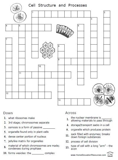 Printable Cell Worksheets Printables Shop