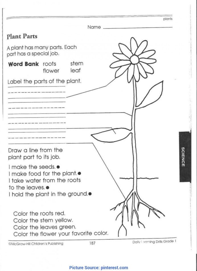 Science Worksheet First Grade Best Third Grade Science Activities 1st Worksheets Picking
