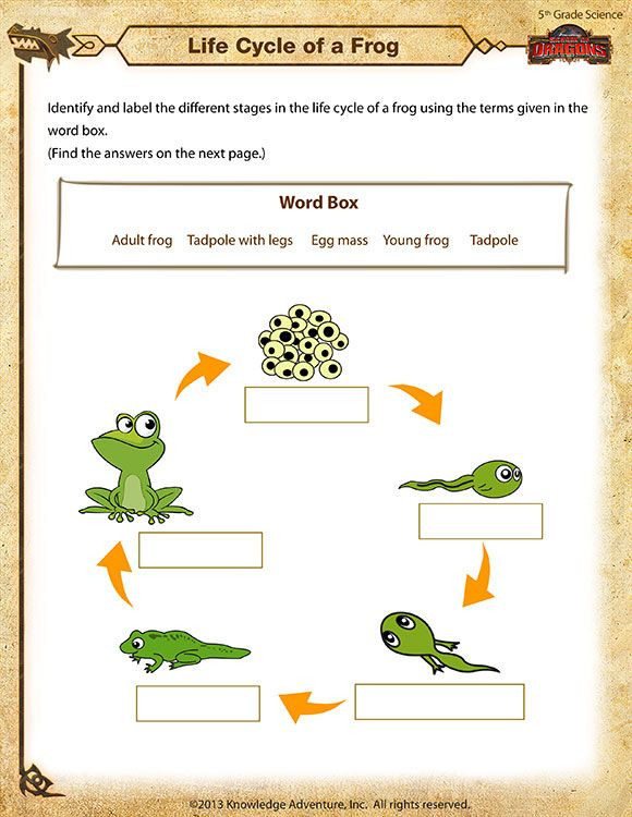 Science Worksheets for 5th Grade Life Cycle Of A Frog Printable Science Worksheets