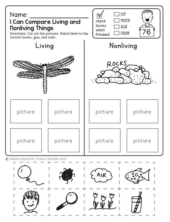 Science Worksheets for Kindergarten Free Freebie No Prep Kindergarten Science Doodle Printables