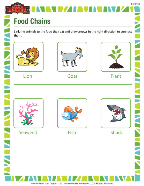 Second Grade Science Worksheets Free Food Chains – Printable 2nd Grade Science Worksheet