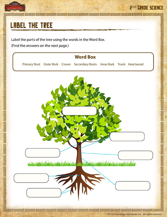 Second Grade Science Worksheets Free Label the Tree View – Science Worksheet for 2nd Grade sod
