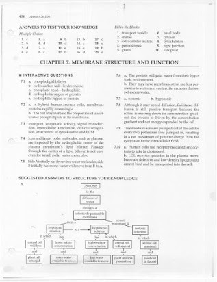 7 3 Cell Transport Worksheet Answers Biology Answer Key Chapter 7