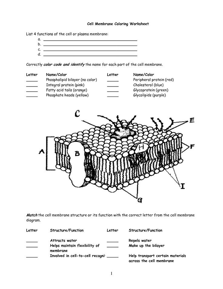 7 3 Cell Transport Worksheet Answers Cell Transport Coloring Worksheet