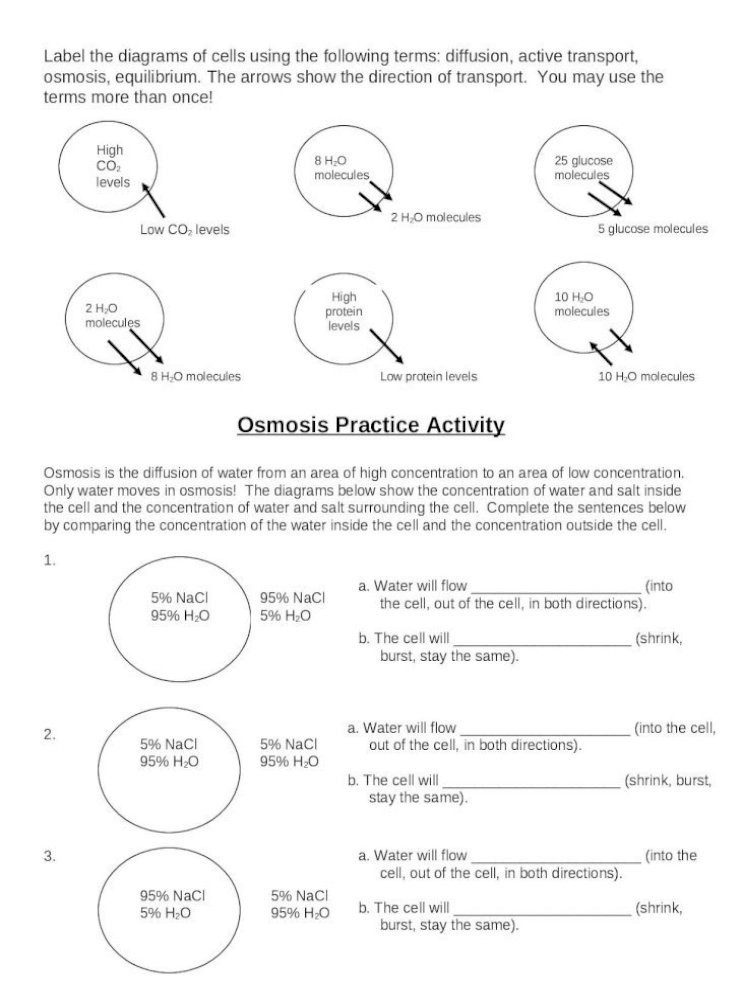 Active and Passive Transport Worksheet Cell Transport Review Worksheet Viewcell Transport Review