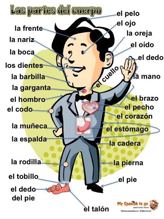 Body Parts In Spanish Worksheet 30 Label Body Parts In Spanish Worksheet Labels Database 2020