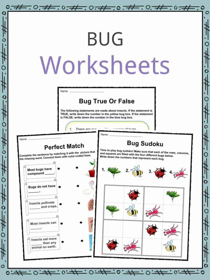 Bug Worksheets for Preschool Bug & Insect Facts Worksheets & Information for Kids