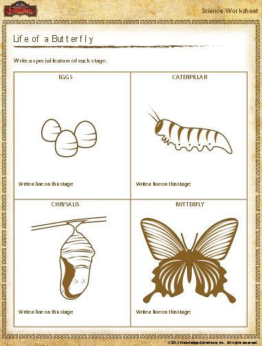 Butterfly Life Cycle Worksheet butterfly Life Cycle Worksheet Download
