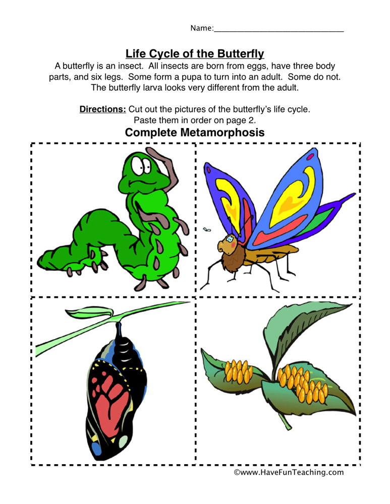 Butterfly Life Cycle Worksheet butterfly Life Cycle Worksheet