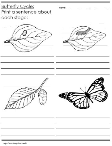 Butterfly Life Cycle Worksheet Identify and Describe the butterfly Life Cycle Worksheets