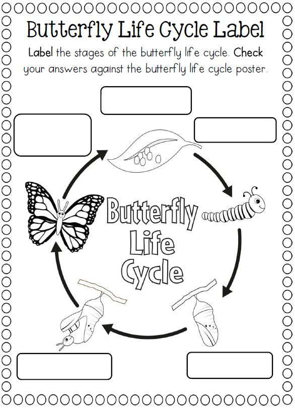 Butterfly Life Cycle Worksheet Life Cycle butterfly Worksheet for Kids 2