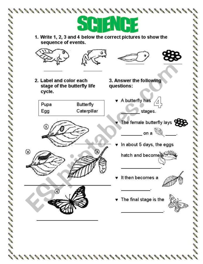 Butterfly Life Cycle Worksheet Life Cycle Frog butterfly Esl Worksheet by Lperecita Animal