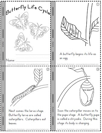 Butterfly Life Cycle Worksheet Life Cycle Of A butterfly