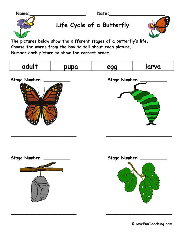 Butterfly Life Cycle Worksheet Life Cycle Of A butterfly Worksheet