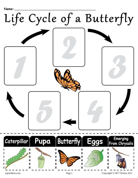 "Butterfly Life Cycle Worksheet Life Cycle Of A butterfly"" Printable Worksheet"