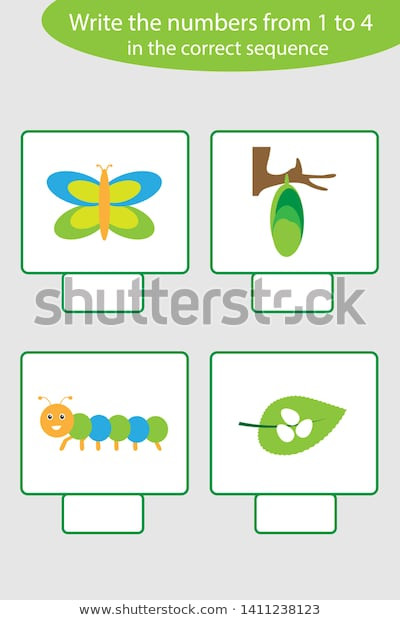Butterfly Life Cycle Worksheet Visual Game Life Cycle butterfly เวกเตอร์สต็อก
