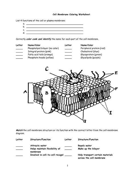 Cell Membrane Worksheet Answers Cell Membrane Worksheet Google Search