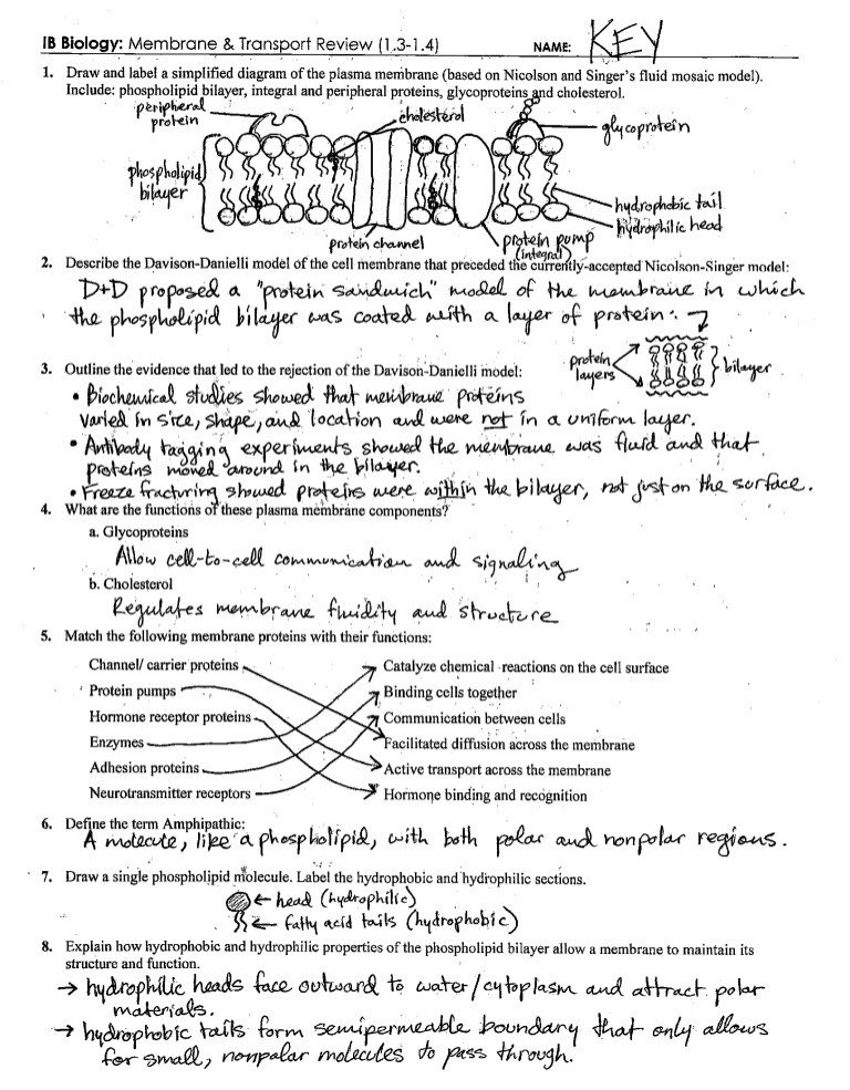 Cell Membrane Worksheet Answers Ib Cell Membrane & Transport Review Key 1 3 1 4