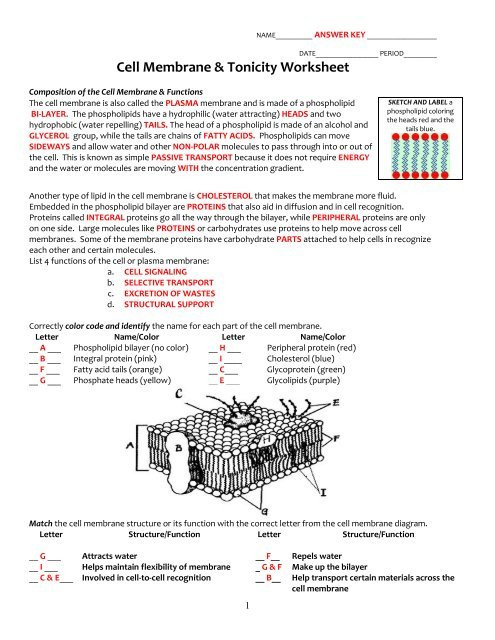 Cell Membrane Worksheet Answers Key Cell Membrane and tonicity Worksheet Pdf