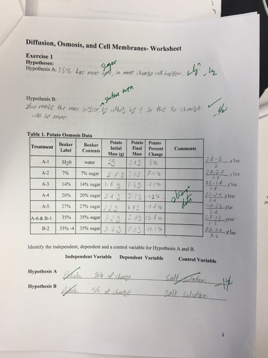 Cell Membrane Worksheet Answers solved Diffusion Osmosis and Cell Membranes Worksheet