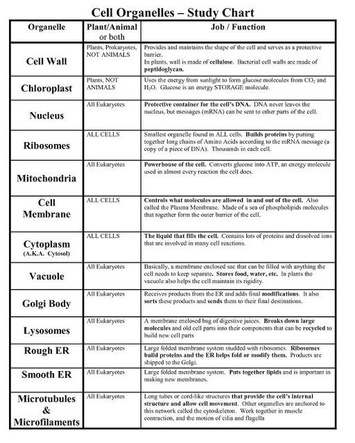 Cell Structure and Function Worksheet Cell organelles and Its Functions