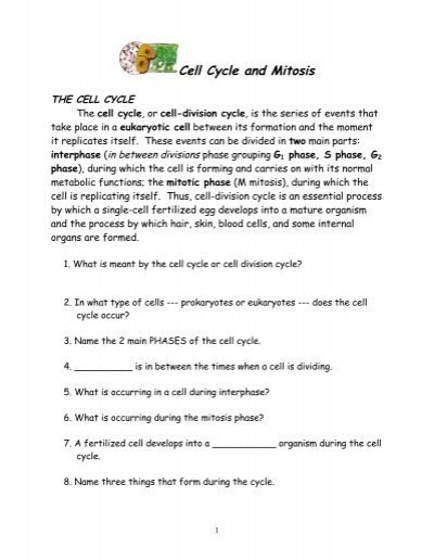 Cells Alive Cell Cycle Worksheet Cell Cycle & Mitosis Nnhsbergbio