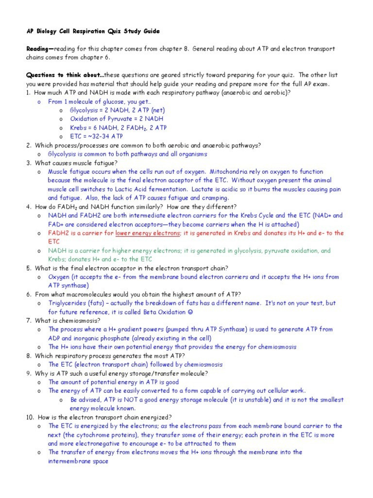 Cellular Respiration Review Worksheet Ap Biology Cell Respiration Quiz Study Guide Answers
