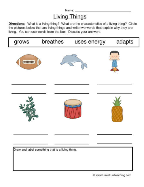 Characteristics Of Life Worksheet Answers Living and Non Living Things Worksheets • Have Fun Teaching