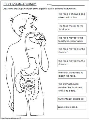 Digestive System Worksheet High School Copy Food and Digestion Lessons Tes Teach