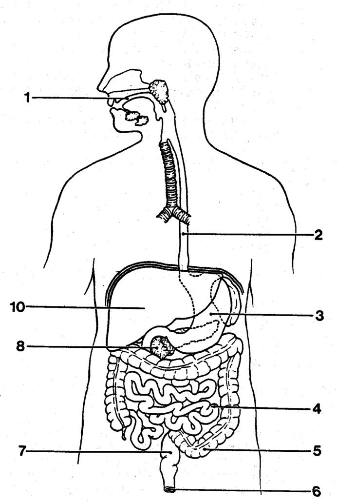 Digestive System Worksheets Middle School Percent Problems 7th Grade Www Education Worksheets