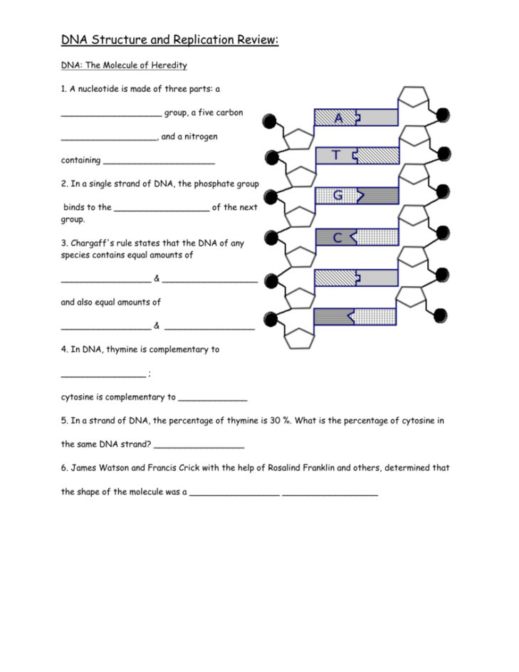 Dna and Replication Worksheet Answers 35 Dna Replication Worksheet Answers Pdf Worksheet