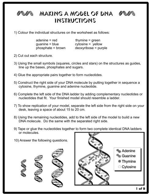 Dna and Replication Worksheet Answers Making A Model Of Dna Instructions