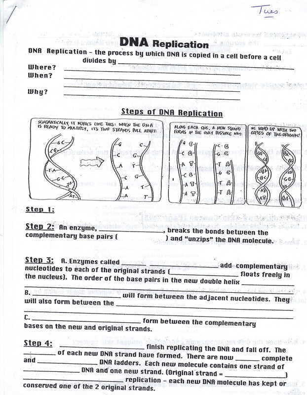 Dna and Replication Worksheet Answers the Dna Worksheet Dna Review Worksheet Pichaglobal Rna