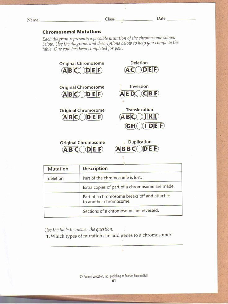 Dna Mutations Practice Worksheet 50 Dna Mutations Practice Worksheet Answer In 2020