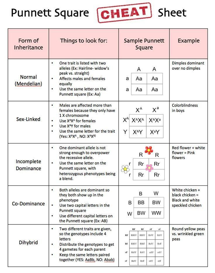 Dna Mutations Practice Worksheet Pin On Printable Blank Worksheet Template