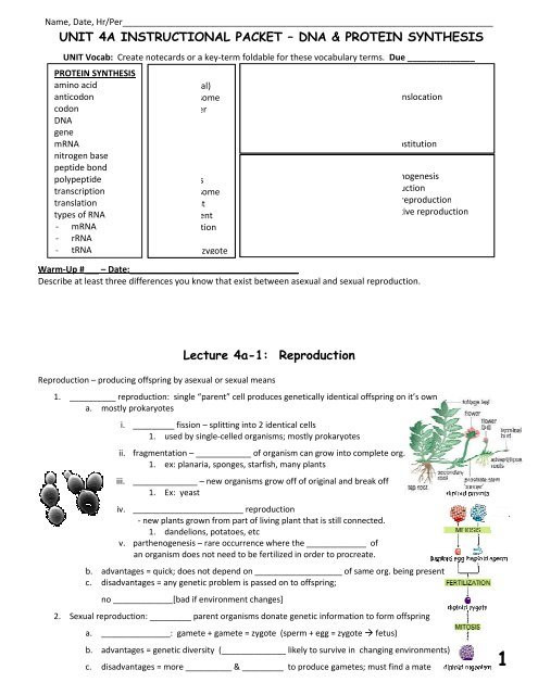 Dna Mutations Practice Worksheet Unit 4a Packet Fulton County Schools