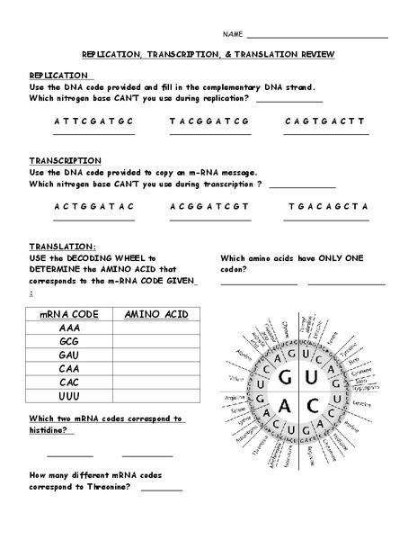 Dna Replication Review Worksheet 33 Dna Replication Review Worksheet Worksheet Resource Plans