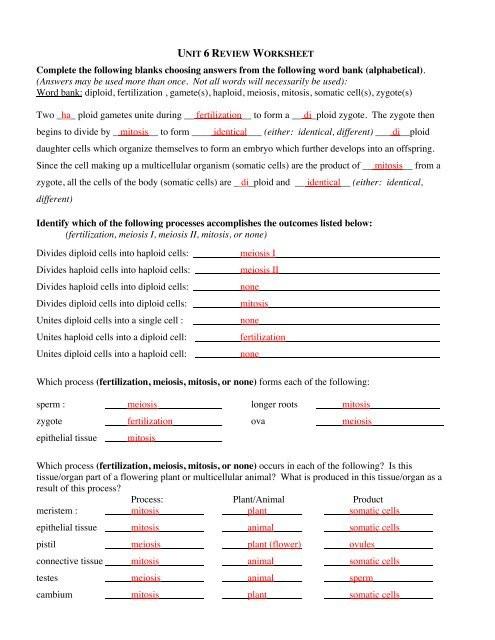 Dna Replication Review Worksheet Answers to Unit 6 Review Worksheet