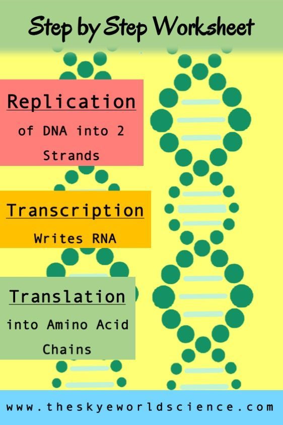 Dna Replication Review Worksheet Replication Transcription and Translation Worksheet