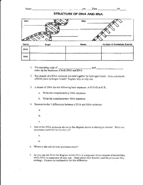 Dna Structure Worksheet High School Dna Structure Worksheet Answer Promotiontablecovers