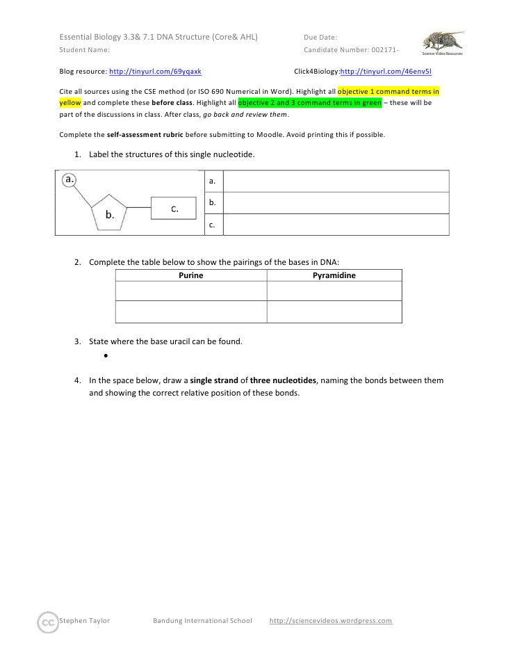 Dna Structure Worksheet High School Essential Biology 3 3 & 7 1 Dna Structure Core & Ahl
