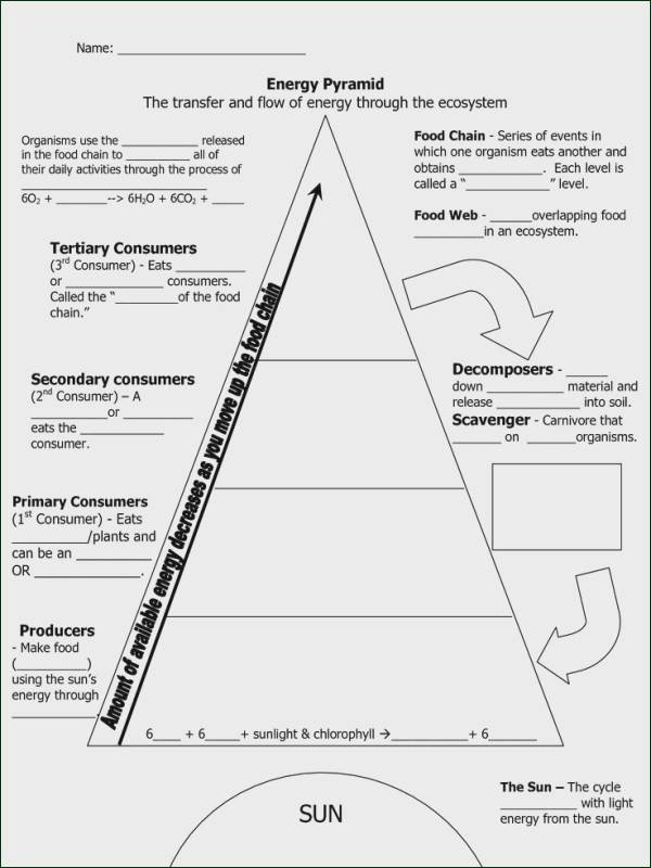 Ecological Pyramids Worksheet Answers 34 Ecological Pyramid Worksheet Answers Worksheet Resource