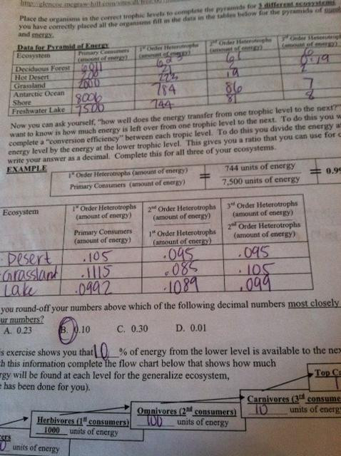 Ecological Pyramids Worksheet Answers Quarter 4 Labs