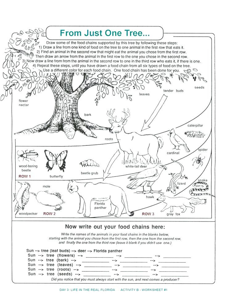 Ecology Worksheets Middle School Ecological Pyramid Worksheet Answers Promotiontablecovers