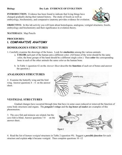 Evidence for Evolution Worksheet Answers Parative Anatomy Worksheet