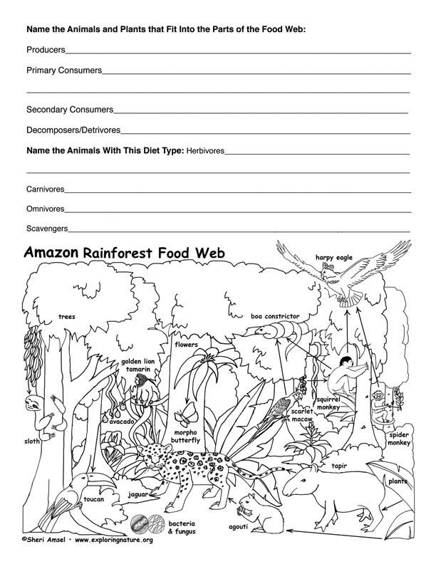 Food Web Worksheet Pdf Amazon Rainforest Food Web Activity with Images